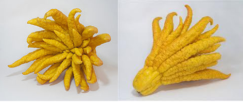 Buddhas Hand For Breakfast?